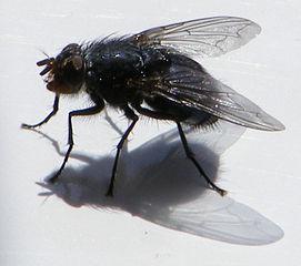 fliegenfallen ungeziefer im haus. Black Bedroom Furniture Sets. Home Design Ideas
