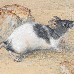 Ultraschall gegen Mäuse einsetzten