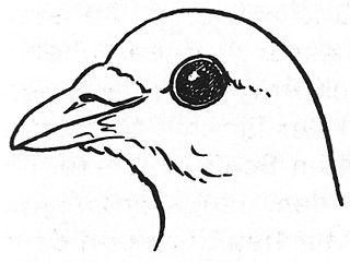 Skizze Taubenkopf